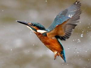 Kingfisher by morgan stephenson