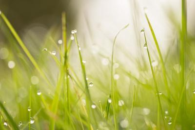 https://imgc.allpostersimages.com/img/posters/morning-dew-drops-in-the-grass_u-L-Q1EXQ060.jpg?artPerspective=n