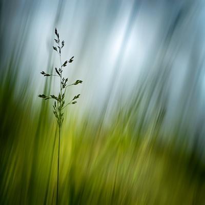 https://imgc.allpostersimages.com/img/posters/morning-grass_u-L-Q1BK2970.jpg?p=0