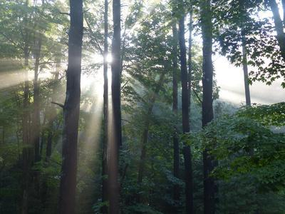 https://imgc.allpostersimages.com/img/posters/morning-light-shining-through-the-forest_u-L-Q1EYDA10.jpg?artPerspective=n