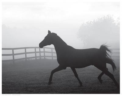 Morning Pasture II