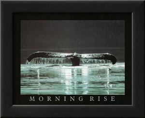 Morning Rise Whale Tail Art Photo