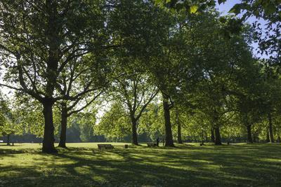 https://imgc.allpostersimages.com/img/posters/morning-sunlight-st-james-park-london-england-united-kingdom_u-L-PWFDRI0.jpg?p=0