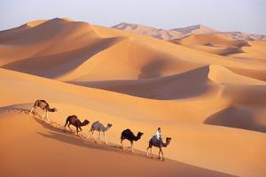 Morocco Camel Train, Berber with Dromedary Camels