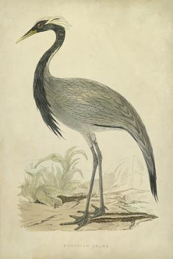 Morris Crane II