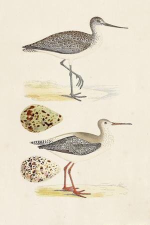 Sandpipers & Eggs I