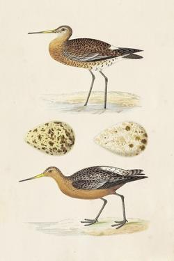Sandpipers & Eggs IV by Morris