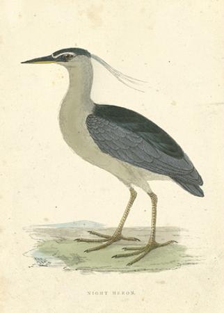 Vintage Night Heron by Morris