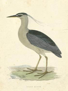 Vintage Night Heron by Morris