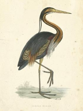 Vintage Purple Heron by Morris