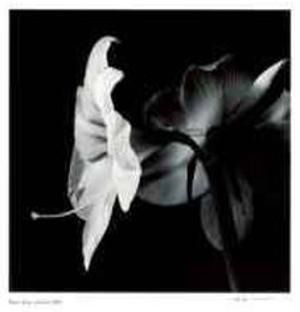 Untitled (flower with long stamen) by Morry Katz