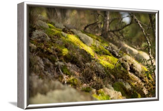 Mossy rocky with sun rays in the forest-Paivi Vikstrom-Framed Photographic Print