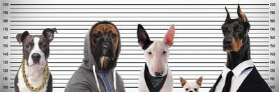 Most Wanted Dogs