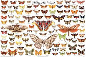 Moths of the World Educational Science Chart Poster