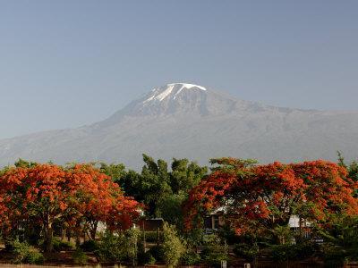 https://imgc.allpostersimages.com/img/posters/mount-kilimanjaro-tanzania-east-africa-africa_u-L-P7X0K40.jpg?p=0