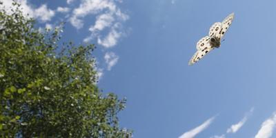 https://imgc.allpostersimages.com/img/posters/mountain-apollo-parnassius-apollo-in-flight-southwest-finland-february-july_u-L-Q13ABD10.jpg?artPerspective=n