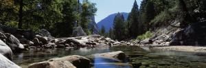 Mountain Behind Pine Trees, Tenaya Creek, Yosemite National Park, California, USA