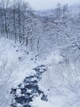Mountain Stream in Snow