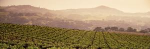 Mountains in Front of Vineyards, Asti, California, USA