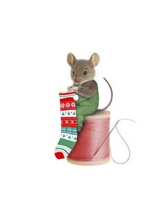 https://imgc.allpostersimages.com/img/posters/mouse-on-spool_u-L-PYLVRQ0.jpg?p=0
