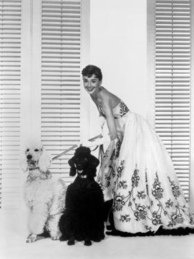 Audrey Hepburn and Dogs by Movie Star News