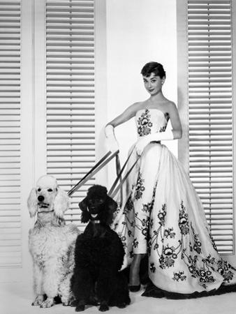 Audrey Hepburn Walking Dogs Sabrina by Movie Star News
