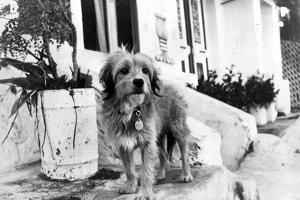 Benji in Black and White by Movie Star News