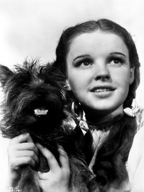 Dorothy Gale Holding Toto Wizard of Oz - Photograph Black & White by Movie Star News