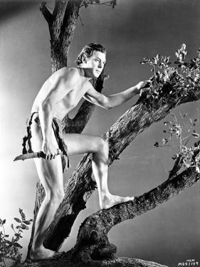 Johnny Weissmuller Climbing a Tree in a Movie Scene by Movie Star News