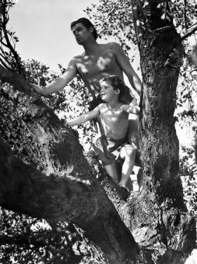 Johnny Weissmuller Climbing Tree in Black and White by Movie Star News