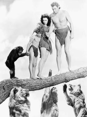 Johnny Weissmuller Escaping from Lions in a Movie Scene by Movie Star News