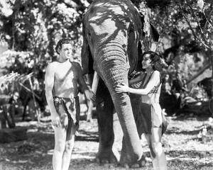 Johnny Weissmuller Petting an Elephant with a Woman in a Classic Movie Scene by Movie Star News