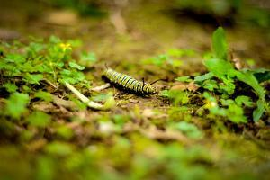 Colorful Caterpiller by Mr Doomits