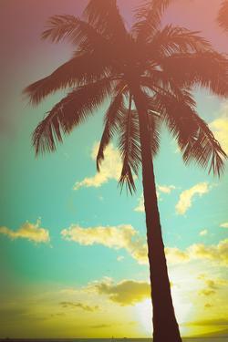 Retro Styled Hawaiian Palm Tree by Mr Doomits