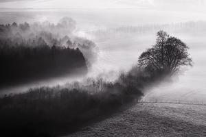 Black and White Mist Landscape by MrEco99