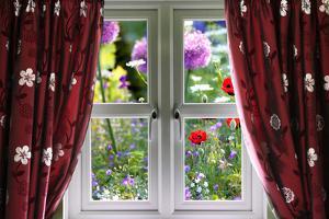 Window View onto Wild Summer Garden by MrEco99