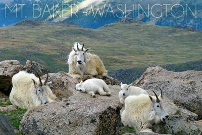https://imgc.allpostersimages.com/img/posters/mt-baker-washington-mountain-goat-family_u-L-Q1GQTAR0.jpg?p=0