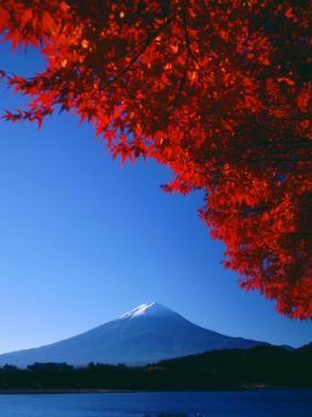 Mt. Fuji and Maple Leaves, Lake Kawaguchi, Yamanashi, Japan