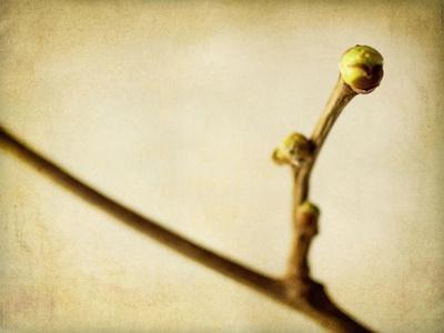 https://imgc.allpostersimages.com/img/posters/mulberry-1_u-L-PYMDTK0.jpg?artPerspective=n