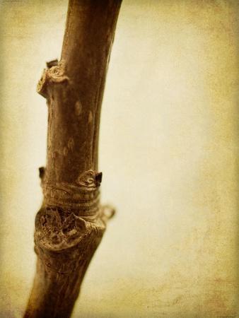 https://imgc.allpostersimages.com/img/posters/mulberry-3_u-L-PYMDVR0.jpg?artPerspective=n