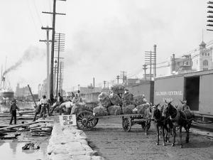 Mule Teams and the Levee, New Orleans, Louisiana