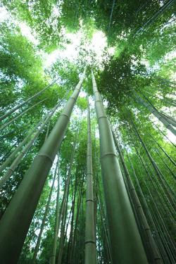 Bamboo Forest by Multi-bits