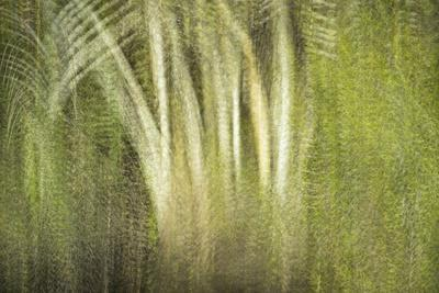 https://imgc.allpostersimages.com/img/posters/multiple-exposure-of-florida-palm-trees-in-water_u-L-PU3CYJ0.jpg?p=0