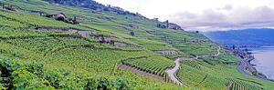 Village of Rivaz and Vineyards. by Murat Taner