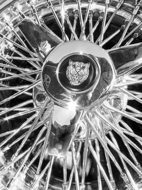 Jaguar Spokes by Murray Bolesta