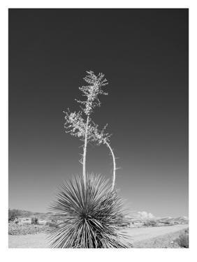 Road Trip #4 by Murray Bolesta