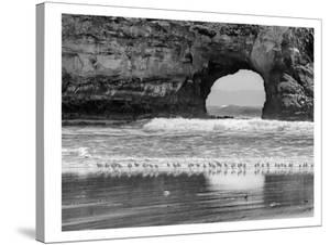 Seabirds And Sea Arch by Murray Bolesta