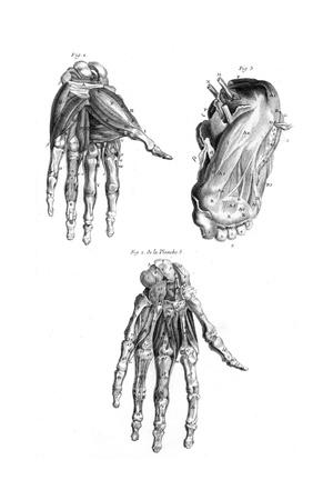 https://imgc.allpostersimages.com/img/posters/muscles-of-hand-and-foot_u-L-PS1BHZ0.jpg?artPerspective=n
