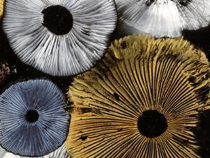 Mushroom Spores Close-Up