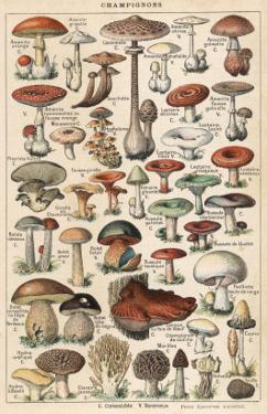Mushrooms Larousse 1913